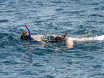 Golfinhos & snorkling_15